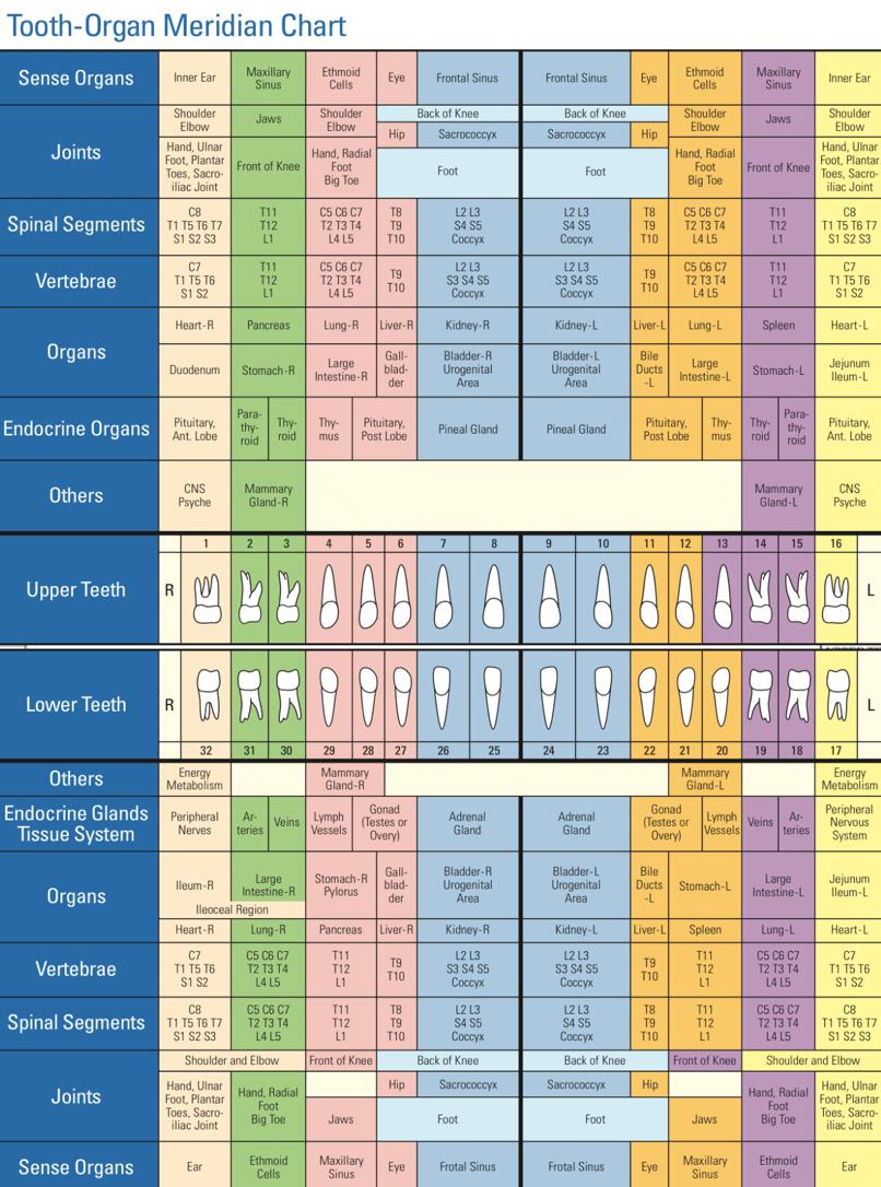 Tooth-Organ Meridian Chart